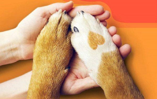 Evcil Hayvan Ürünleri satın al.